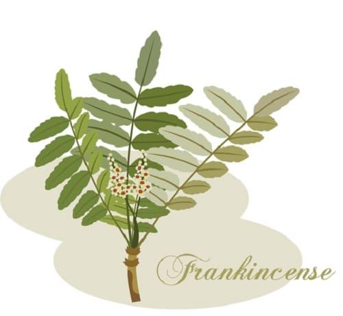 フランキンスのアロマオイル